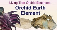 Orchid Earth Element